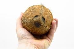 Noix de coco exotique de fruit avec la surface brune photo libre de droits