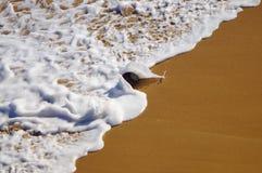 Noix de coco jetée en l'air dans le ressac de la plage Porto Rico de Jobos images stock