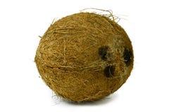 Noix de coco mûre sèche d'isolement sur le blanc Photographie stock libre de droits