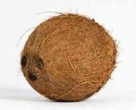 Noix de coco (nucifera de Cocus) Images stock