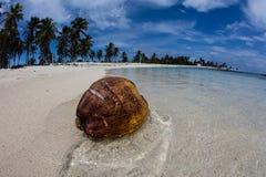 Noix de coco, plage et île à distance en mer des Caraïbes photo libre de droits