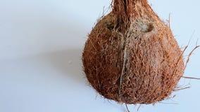 Noix de coco sèche Photographie stock libre de droits