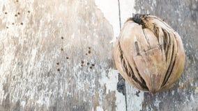 Noix de coco sèche de spathe Images stock