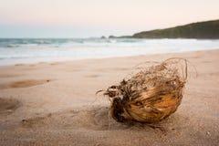 Noix de coco sèche sur le sable Images libres de droits