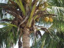 Noix de coco sur la plage Photo stock
