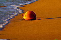 Noix de coco sur la plage Photo stock