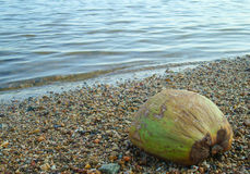 Noix de coco sur la plage Photo libre de droits