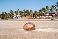 Noix de coco sur la plage de sable Photographie stock