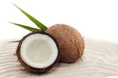 Noix de coco sur le sable Photographie stock libre de droits