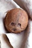 Noix de coco sur le tissu Photo libre de droits