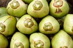 Noix de coco tendres Photos libres de droits