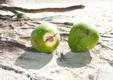 Noix de coco tombées Photo libre de droits