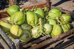 Noix de coco vertes fraîches Image libre de droits