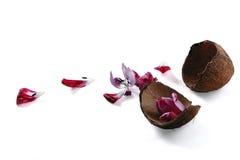 Noix de coco vide avec des pétales Image stock
