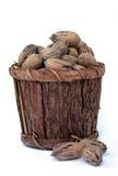 Noix de pécan dans la position en bois Photos stock