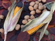 Noix et maïs en atmosphère d'automne photo stock
