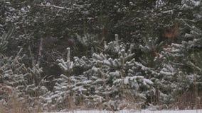 Noël de forêt d'hiver de Milou clips vidéos