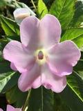 Nom inconnu d'une belle fleur Photographie stock