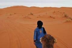Nomad Berber pulling dromedary through Sahara Stock Photos
