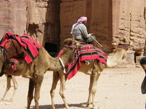 Nomad in the desert. A Jordanian Arab seated on camel in the desert near Petra Stock Image