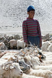 Nomad with goats in Ladakh, Jammu and Kashmir State, North India Royalty Free Stock Photo