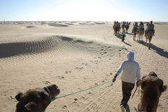 Nomad leading tourists on camels Stock Photos