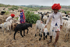 Nomad People in India. December 11,2010 Mandu,Madhya Pradesh,India-A group of Banjara people with their farm animal Stock Images