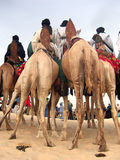 Nomad riders on camels at desert festival Stock Image