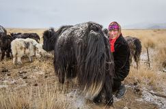 Nomad woman milking a yak. Bayan Ulgii, Mongolia - circa Oxtober 2015: a local Nimadic woman is milking a yak in a early hours of a very cold day Stock Photo