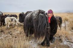 Nomad woman milking a yak Stock Photo