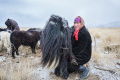Nomad woman milking a yak Royalty Free Stock Image