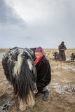 Nomad woman milking a yak Stock Photography