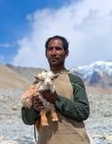 Nomade con goatling in Ladakh, India Fotografie Stock Libere da Diritti