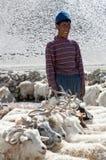 Nomade con le capre in Ladakh, stato del Jammu e Kashmir, India del nord Fotografia Stock Libera da Diritti