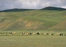 Nomaden in Ladakh, Indien lizenzfreies stockbild