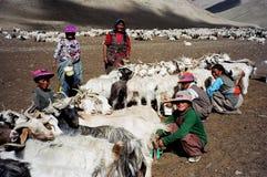 Nomaden in Ladakh, Indien stockbild