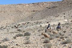 Nomader och får i Ein avdatnationalpark i Israel Arkivfoton