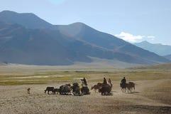 Nomades de l'Himalaya Photos stock
