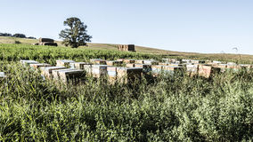 Nomadic beekeeping in the fields. Beehives in the fields, nomadic beeiping stock image