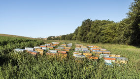 Nomadic beekeeping in the fields. Beehives in the fields, nomadic beeiping royalty free stock photo