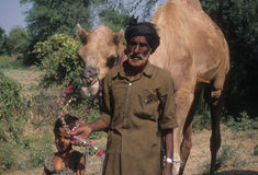 Nomadic family with camels and wagon, Stock Photography