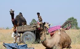 Nomadic gypsy people are preparing to traditional cattle fair holiday ,India royalty free stock images