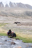 Nomadic life at 15.000 ft. TSO MORIRI, LADAKH, INDIA -JULY 21: Unidentified Changpa nomads washing pots in the river. Changpa herders use the land of the valley Stock Image