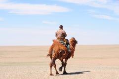 Nomadische veehoeder op zijn kameel Mongolië Stock Foto's
