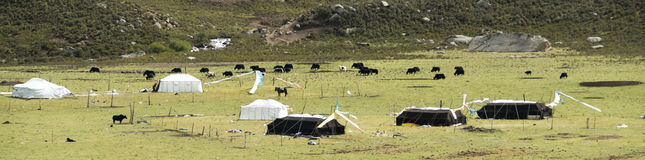 Nomads' camp of Amdo. Tibetan nomads camp. Traditional black and white tents, herd yaks Stock Photography
