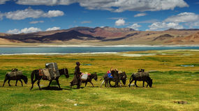 Nomads. Caravan of donkeys in the Himalayas, Ladakh, India Royalty Free Stock Photos