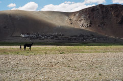 Nomads in Ladakh, India. Till date the people of Ladakh are semi Nomads and take their Yak, sheep and goats to the high altitude pastures behind the mighty Royalty Free Stock Images