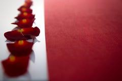 Nombre de pétales des roses sur un blanc et un endroit pour le texte sur le rouge Images libres de droits