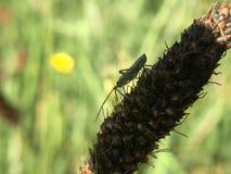 ¿Nombre ese insecto? Imágenes de archivo libres de regalías