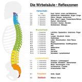 Nombres del alemán de la carta del Reflexology de la espina dorsal stock de ilustración